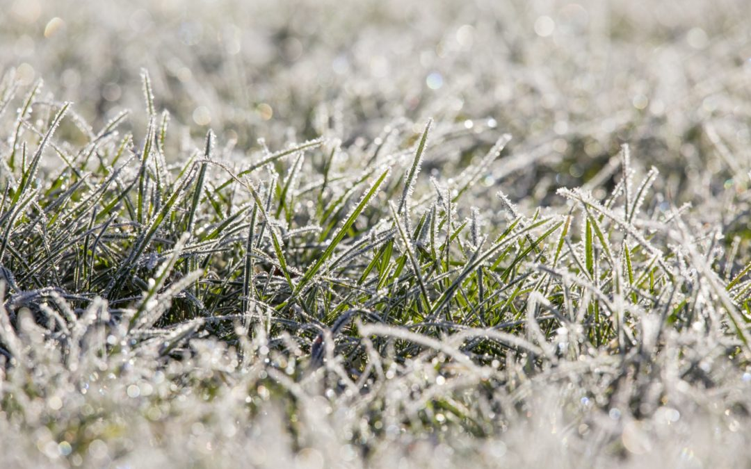 Winter & Pre-Winter Lawn Care Do's and Don'ts